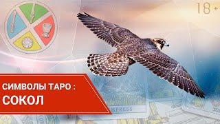 Значение символа Сокол в картах Таро.