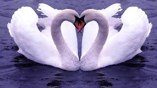 """Берегиня: Лебединые практики.  Активация 2 """"Лебёдушка и Лебедь"""" (только для женщин)"""